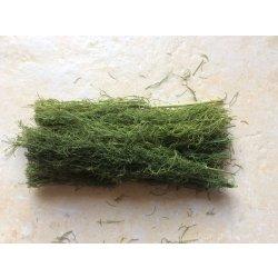 Fenchellaub, Fenchelkraut, grün, getrocknet, 10 gr. günstig kaufen Aquaristik-Langer
