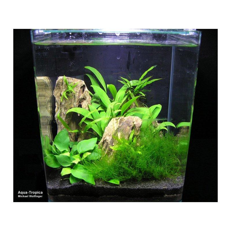nano aquarium blau cubic 60 wei glas aquarien g nstig kaufen 109 95. Black Bedroom Furniture Sets. Home Design Ideas