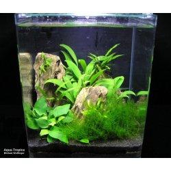 Nano-Aquarium Blau Cubic 60 Weißglas Aquarien günstig kaufen Aquaristik-Langer
