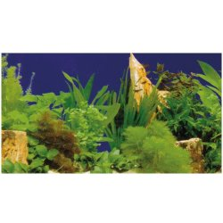 Fotorückwand Pflanzen 2/7 50 cm hoch endlos Aquarienrückwand kaufen Aquaristik-Langer