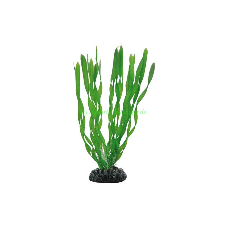 vallisneria 20 cm k nstliche pflanze f r aquarium g nstig kaufen 4 45. Black Bedroom Furniture Sets. Home Design Ideas