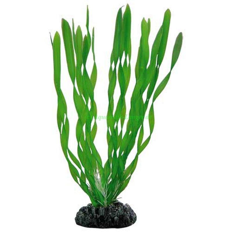 hobby vallisneria k nstliche pflanzen f r aquarium g nstig. Black Bedroom Furniture Sets. Home Design Ideas