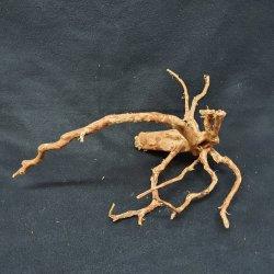 Fingerwurzeln Morkienwurzeln Größe M Aquariendekoration günstig kaufen Aquaristik-Langer
