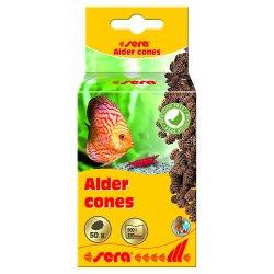 Erlenzapfen Schwarzerlenzapfen sera Alder cones 50 Stück günstig kaufen