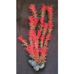 Tetra Red Foxtail, küntliche Pflanze 30 cm hoch