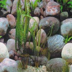 Fotorückwand Steine 1/2 100x50 cm Fotofolie günstig kaufen Aquaristik-Langer