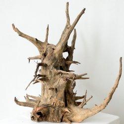 Corbo-Wurzel, natürliche Dekoration